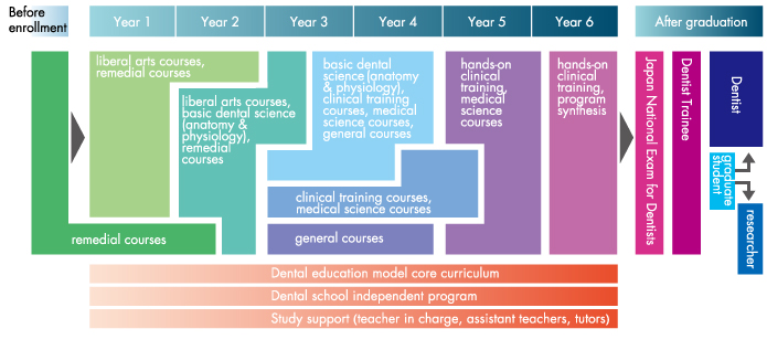 School of Dental Medicine|Tsurumi University & Tsurumi